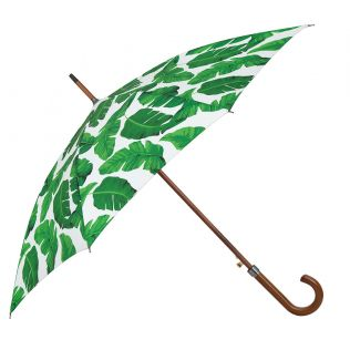 India Circus Pleasant Peduncle Umbrella