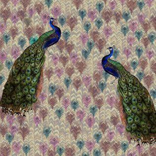 Feather Splendor Mystiqueness Wallpaper